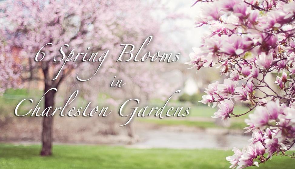 Spring Charleston Gardens