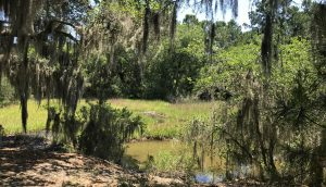 1310 Martins Point Road forest marsh