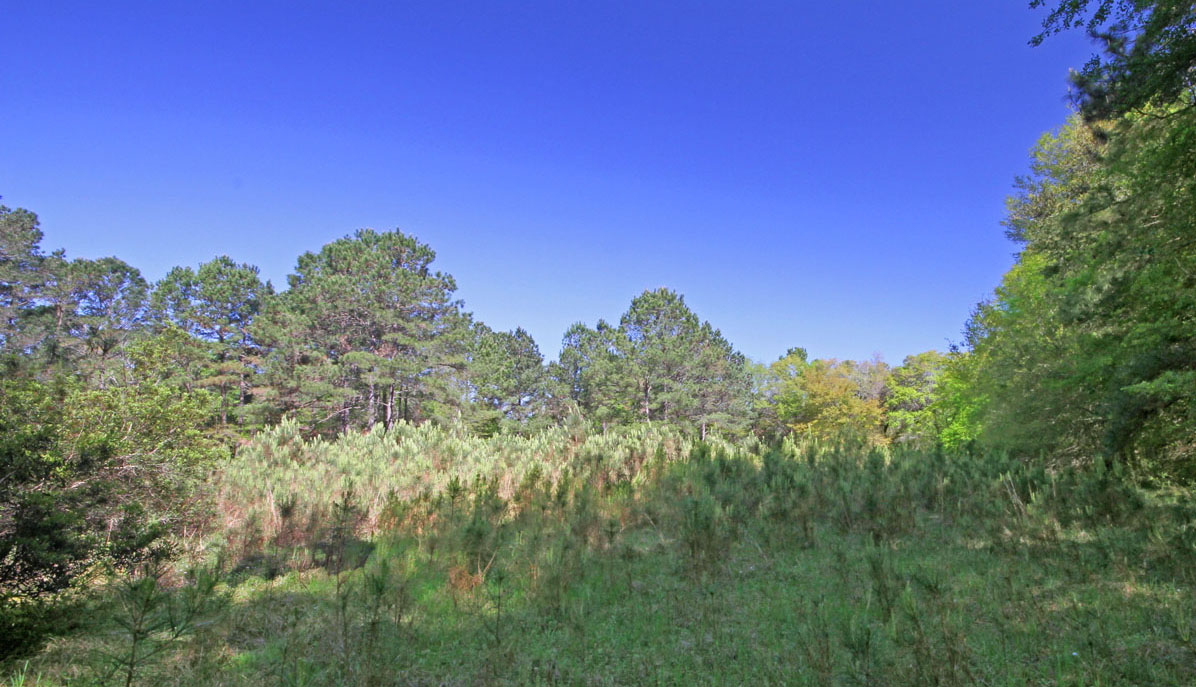 1310 Martins Point Road forest