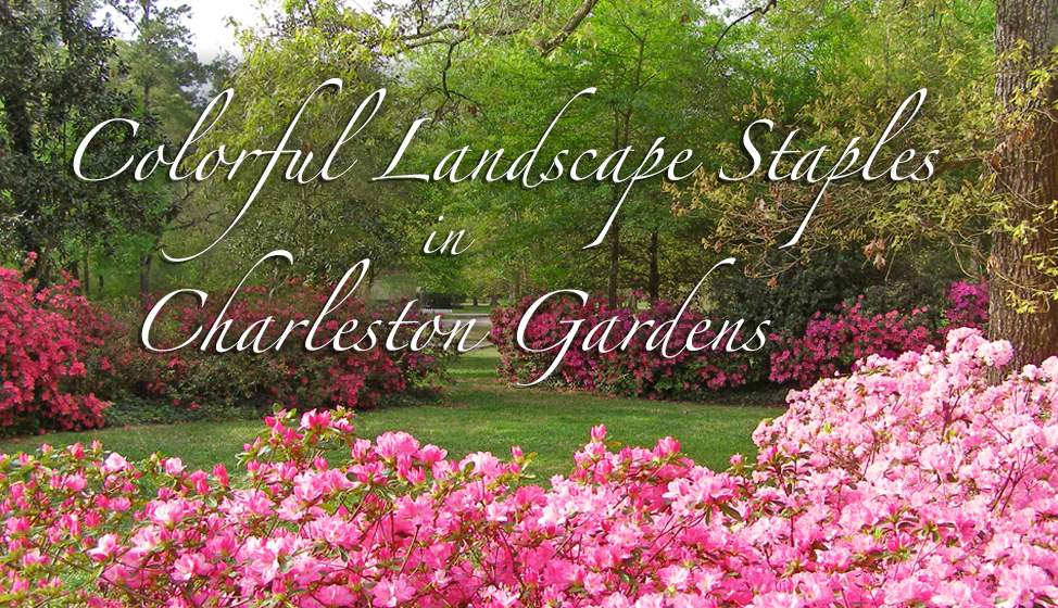 Colorful Landscape Staples in Charleston Gardens