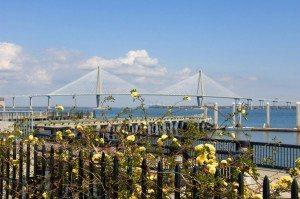 Dockside flowers & Ravenel Bridge