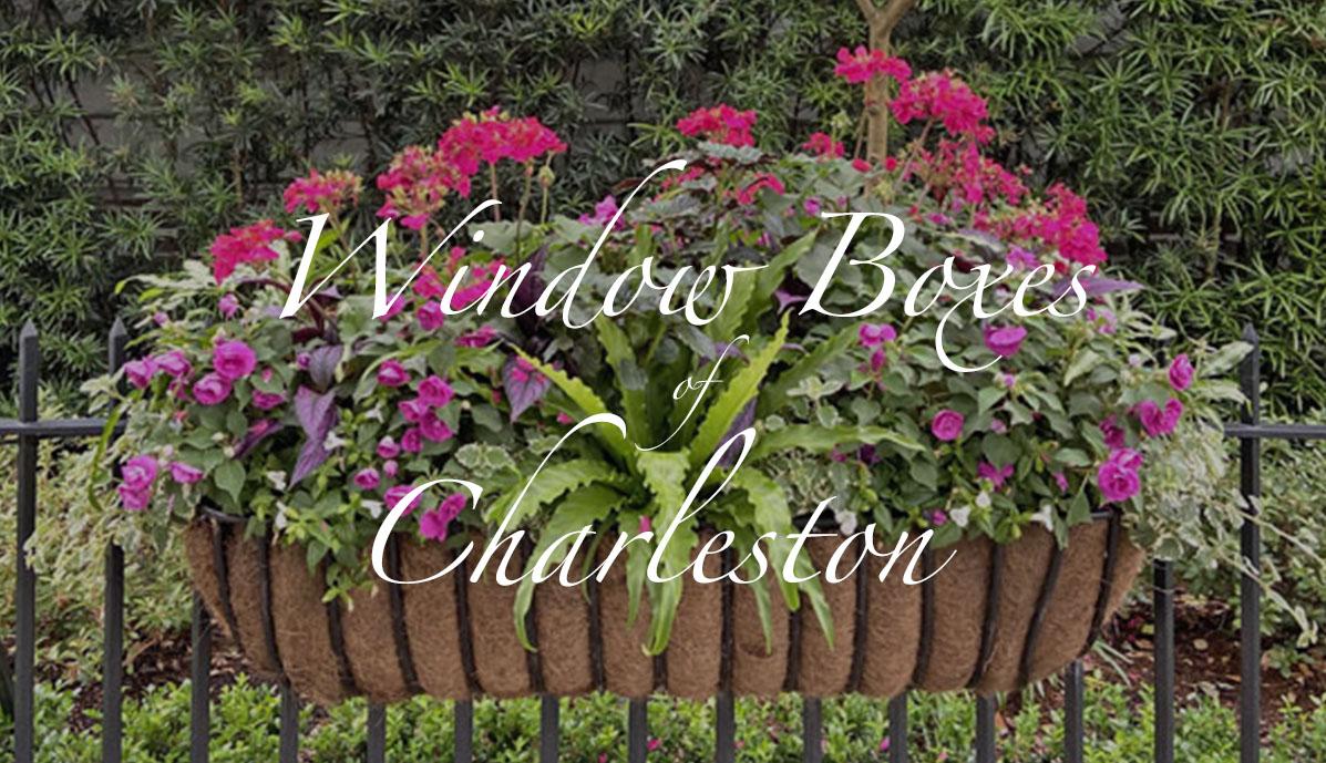 Window Boxes of Charleston
